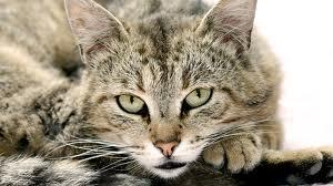 Кот Марлик глава 1