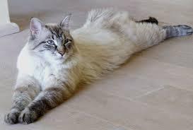 кошка для статьи