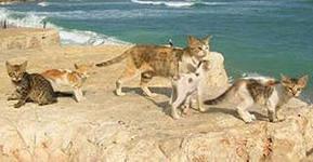 iCAJZL3TN кошки у моря