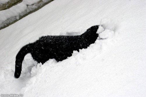 014 чапа в снегу