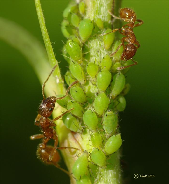 myrm2-1 муравьи
