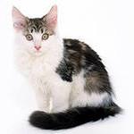 Интересные факты  кошачьей жизни