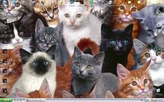 i кошки