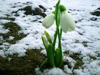 iCAFQK1BL С наступлением весны