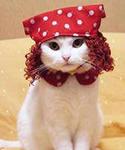 iCAPLZSGQ Кошка 1